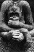 [Thinking monkey-771567.jpg]
