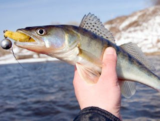 otter tail country county fishing tips fish walleye help pointers minesota lake lakes resort fisherman cabin cottage relaxation
