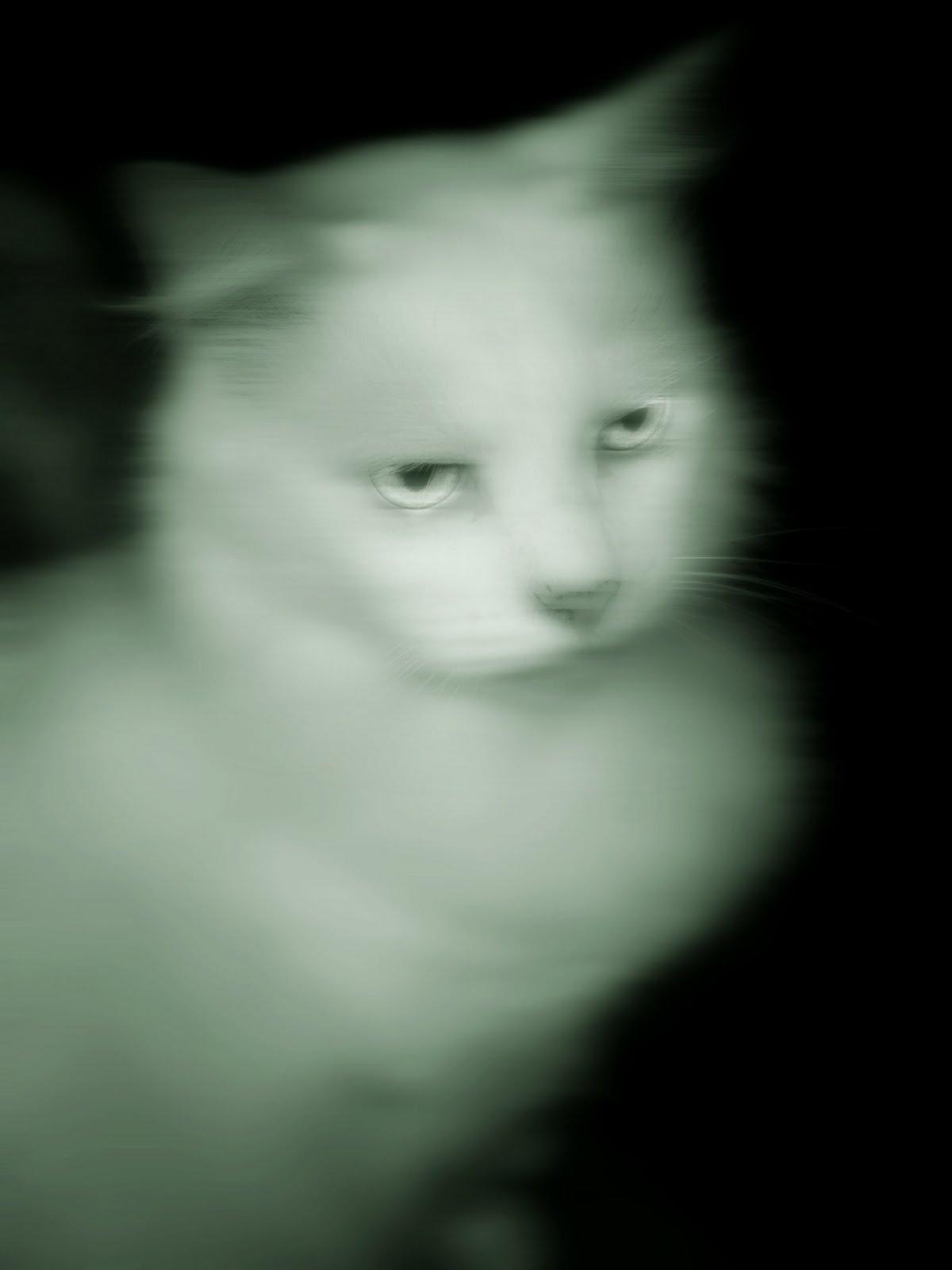 Halloween Spooktacular Ghost Cat