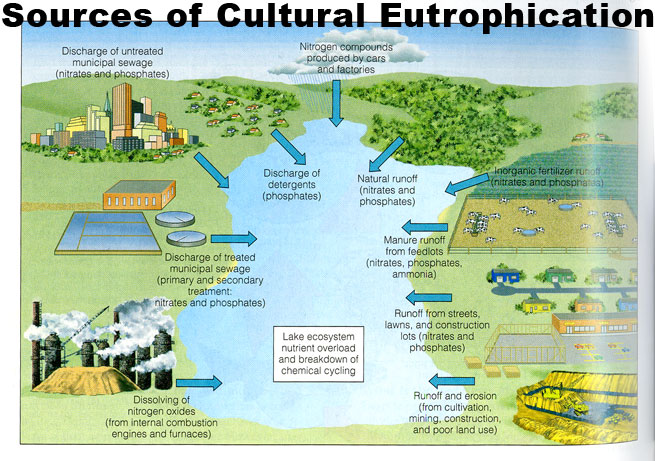 cultural pollution Chapter 2 social and emotional learning in britain: guarding against cultural  pollution or maintaining culture by peter wood pages 15 download pdf 010 mb.