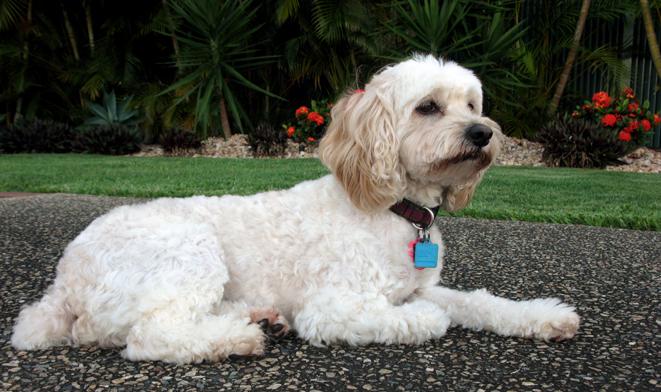 Best Dog Groomer In Brisbane