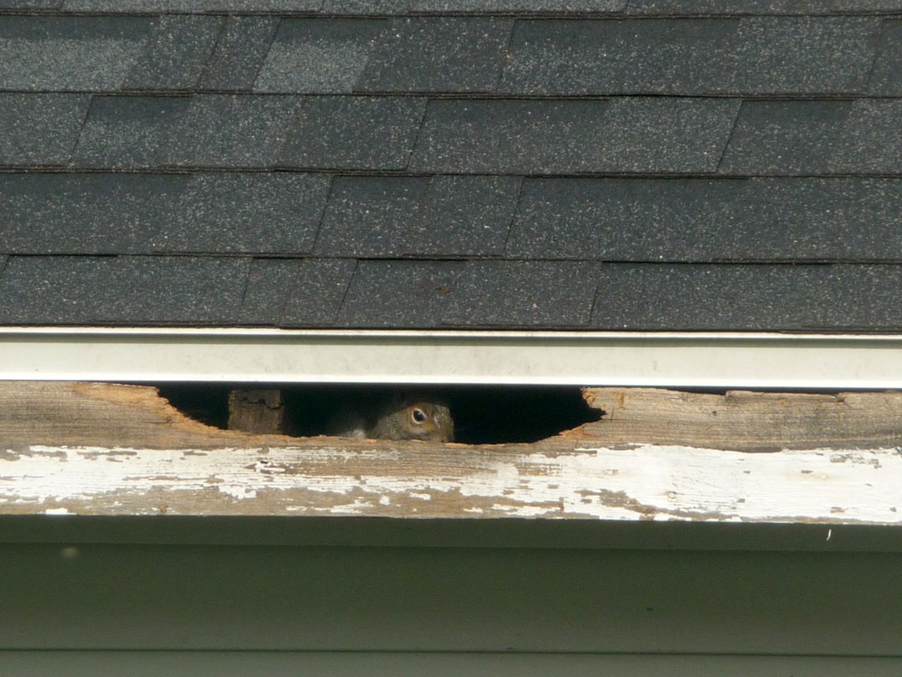 Spy On My Neighbour
