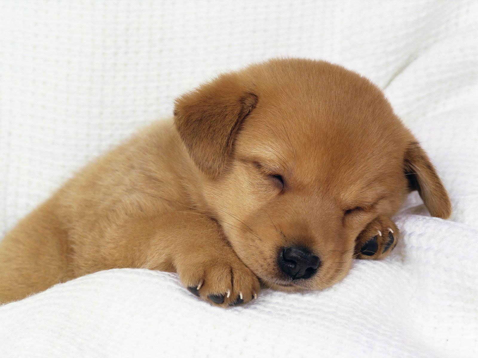Gambar Anak Anjing Lucu Imut