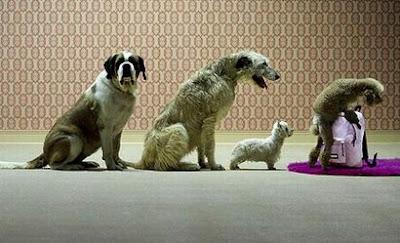 Dog turn