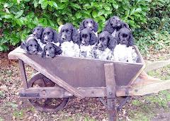 Stommeerpolder pupjes 2007