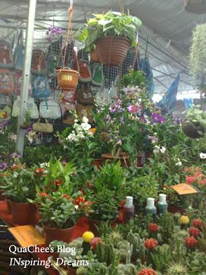 raya, singapore, geylang serai, plants