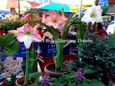 gaya market orchid