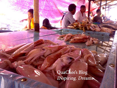 kk market, squid