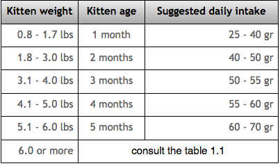 How much should a male ragdoll cat weigh
