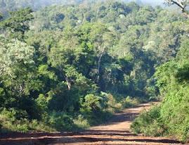 camino de la selva paranaense