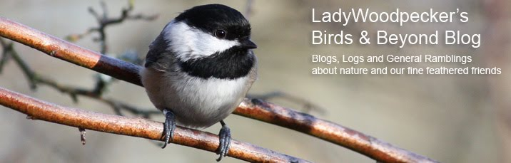Lady Woodpecker's Birds & Beyond Blog