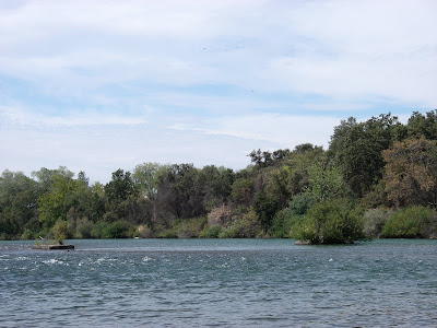Fly fishing traditions lower sacramento river with mike for Fishing spots in sacramento