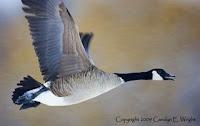 www.photoattorney.com