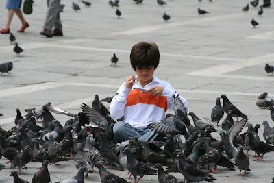 Kid Loves Pigeons