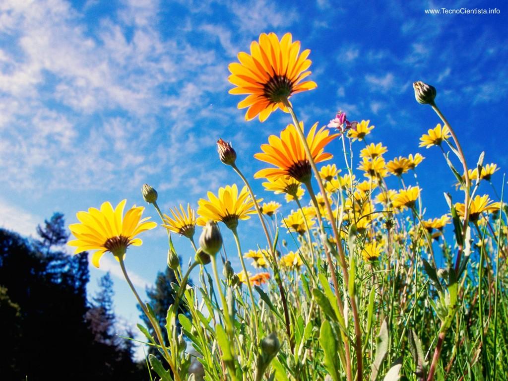 jardim rosas amarelas:Foto Google