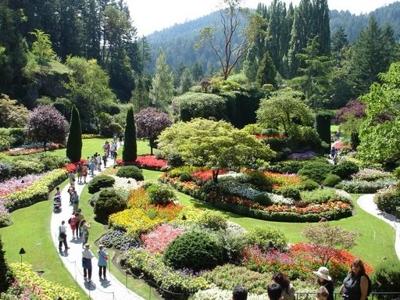 Christo clu city galeria - Arboles ornamentales para jardin ...