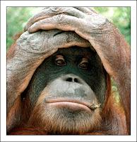 La mandíbula del Eoanthropus era de un orangután moderno