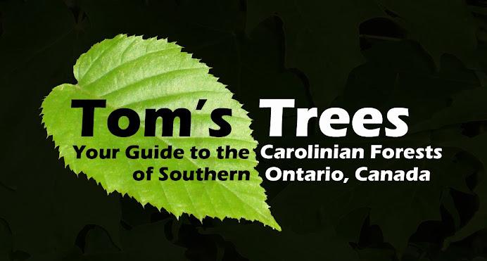 Tom's Trees