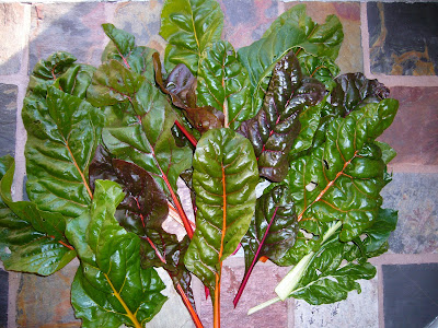 Swiss chard from the Maryland Garden of Two Green Acres