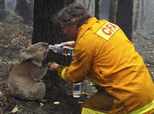 Aussie Kindness - Sam the Koala