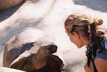 Tortugas gigantes de Zanzibar