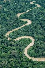 Amazônia entre Florestas e Aguas