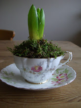 My Tea Cup Hyacinth