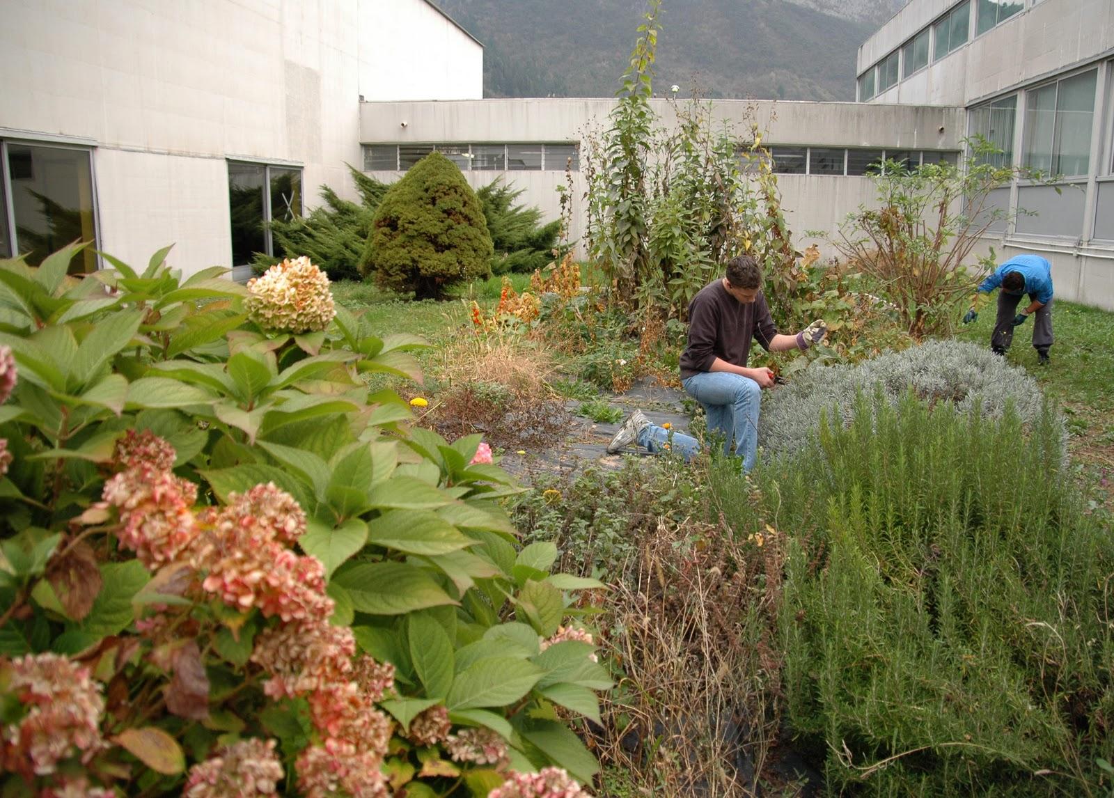 Chimica e biologia in carnia coltivazioni di piante - Lavori in giardino ...