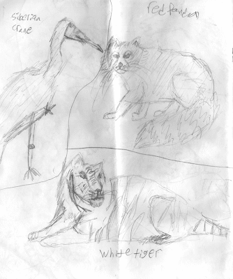 Sketches made by Matthew Riccetti at the Cincinnati Zoo in 2009.
