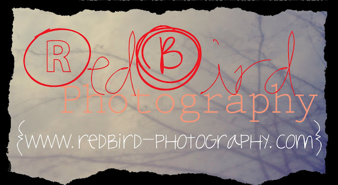 redbird photography