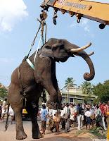 Elefante_Serial_Killer