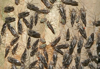Colony_Bug_Horde_Giant_Insects_Image_Picture_Immagine_Insetti_mostruosi