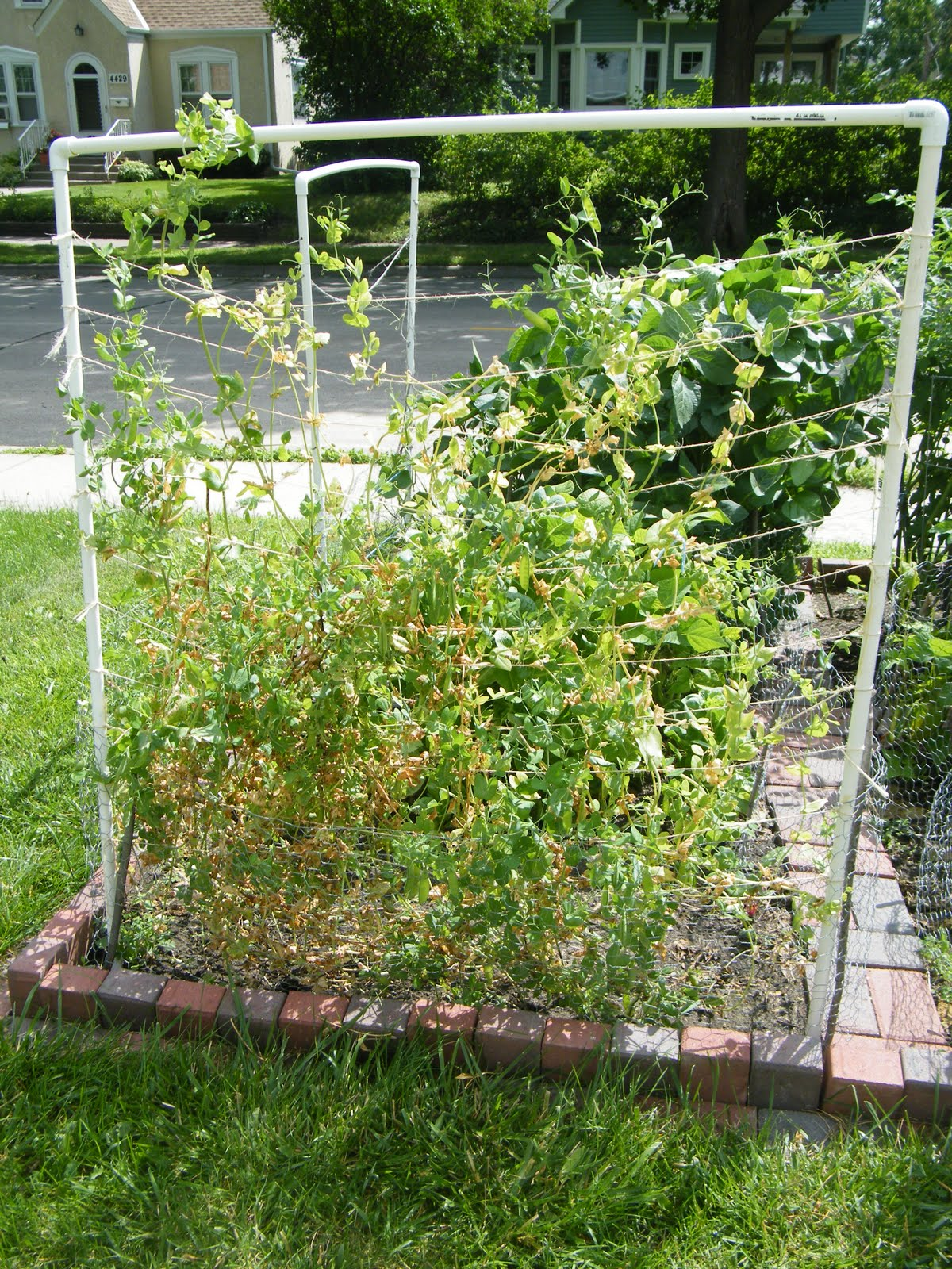 A minneapolis homestead vertical gardening how to build for How to make a vertical garden frame