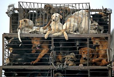 China Dog food market