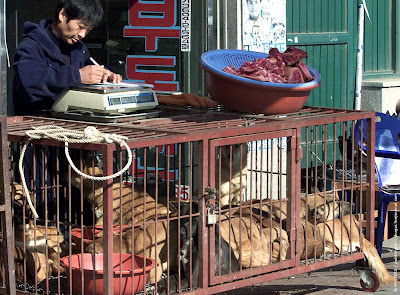 Dog market in South Korea