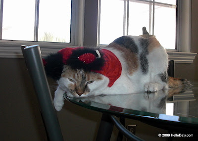 Cats in Halloween Costume