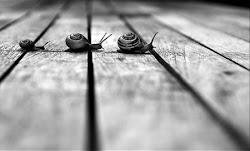 siguiendo tus pasos..