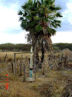 Uma verdadeira desertificação, organizada pela a AESA-PB.