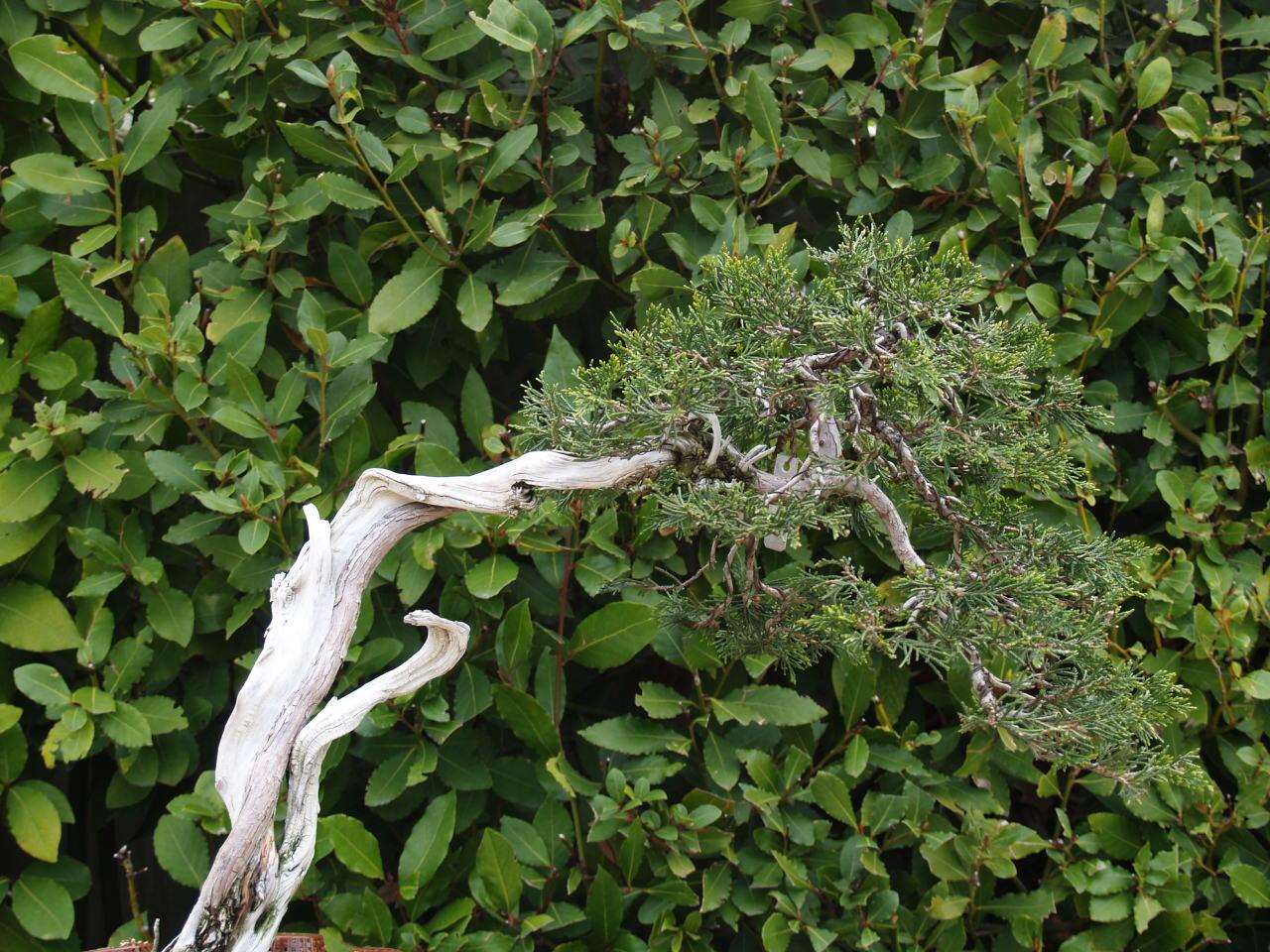 Consultores de estilo el jard n de los bonsais - Jardin de bonsais ...