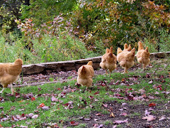 """The Buffingtons"" - golden hens - 2008"