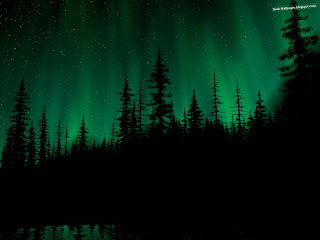 Aurora Over The Dark Forest wallpapers