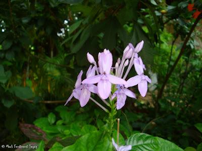 Sentosa Singapore Photo 13