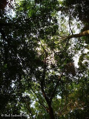 Bintan Mangrove Photo 12