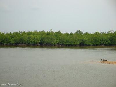 Bintan Mangrove Photo 11