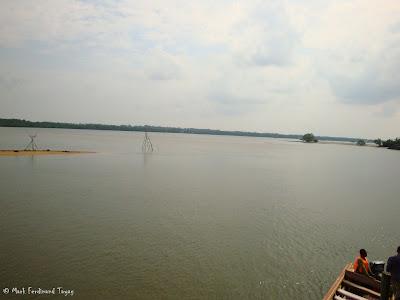 Bintan Mangrove Photo 10
