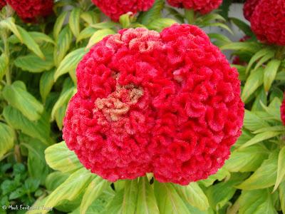 Sentosa Flowers 1