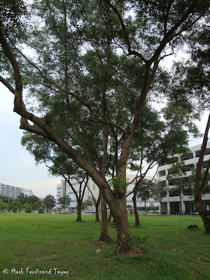 Singapore HDB and Trees Photo 3