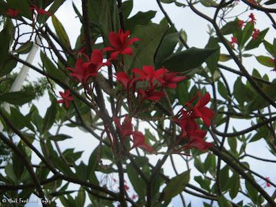 Yishun Town Garden Flowers 4