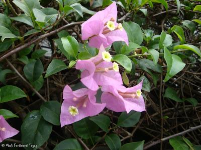 Yishun Town Garden Flowers 3