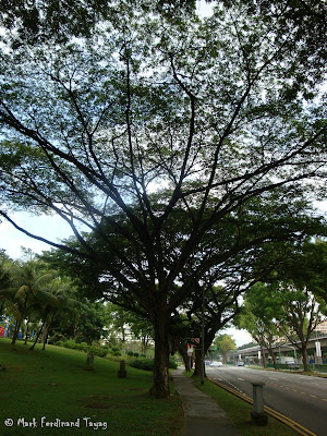 Yishun Town Garden Photo 5